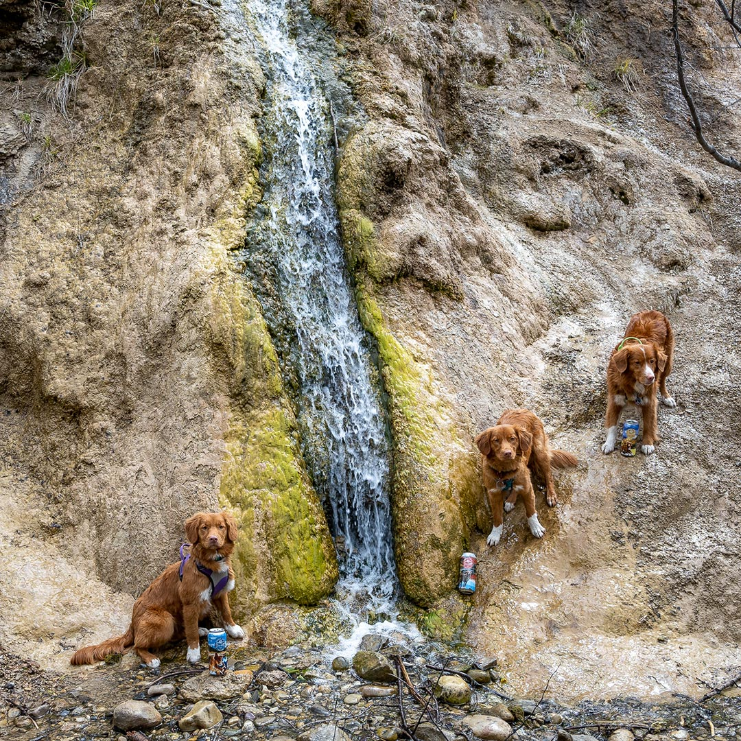 Screaming-Toller-Paw-for-Adventure