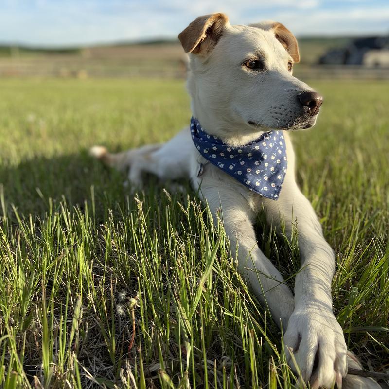 Pooch Pride - Daisy